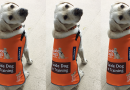 Guide Dogs unveil new look
