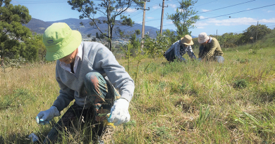 Preserving the Lutana Woodland Reserve