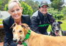 Muzzle free future for accredited greyhounds