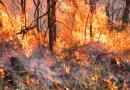 Fire agencies ready for the upcoming bushfire season